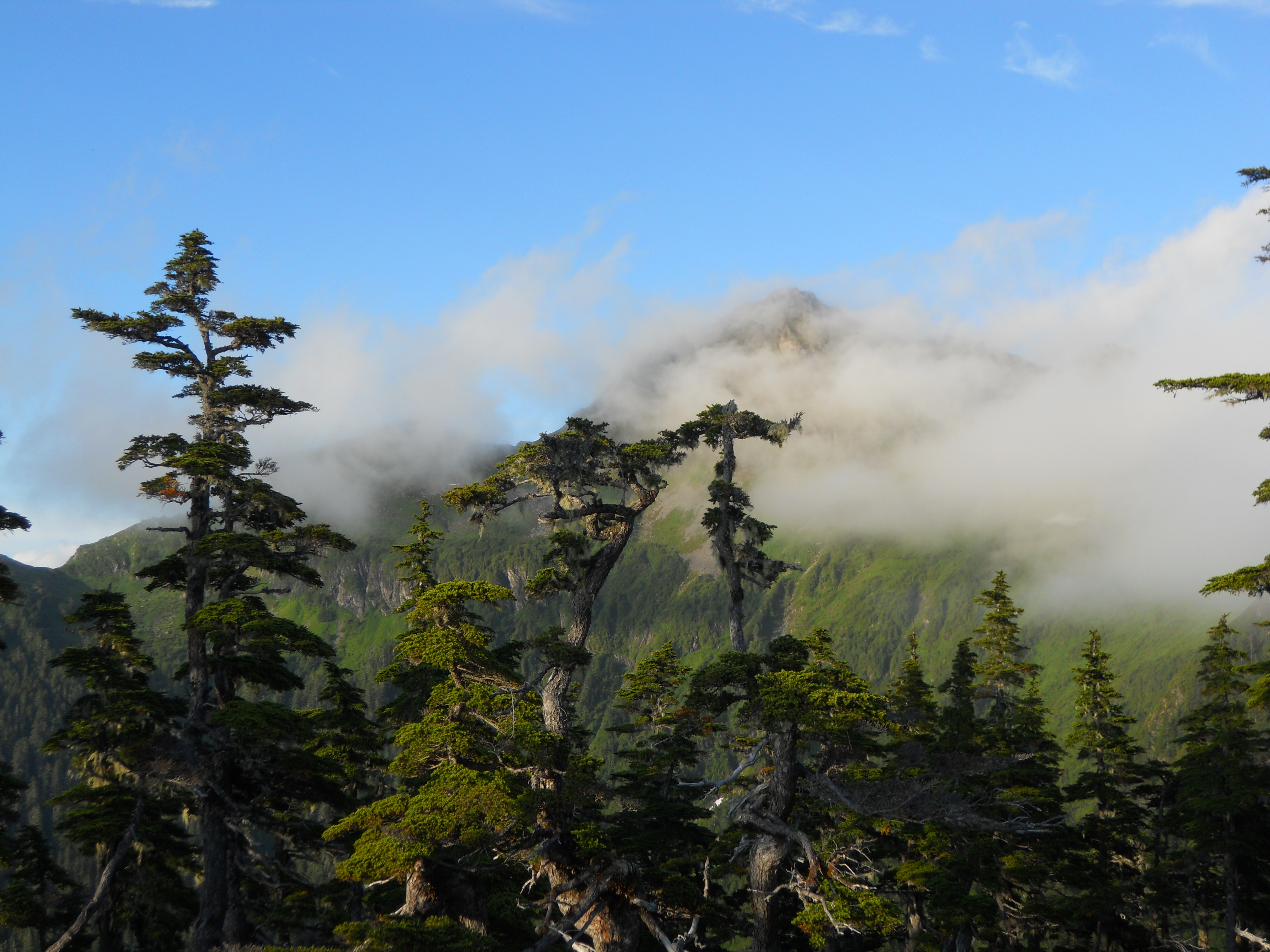 Tongass National Forest - Home