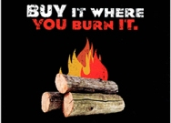 Be aware that firewood can harbor insects and diseases; transporting it can move these pests.