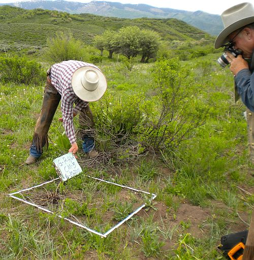 photo of square transect over grass and 2 men estimating cover