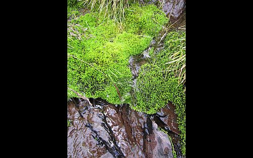 Image of water running over mossy rock