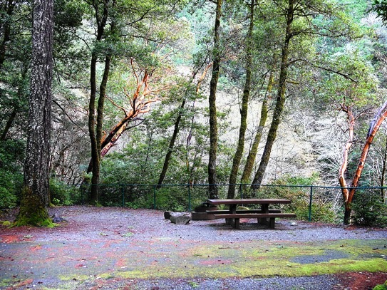 Patrick Creek Campground site 11 features a picnic table, fire ring, and tent pad nestled in trees.