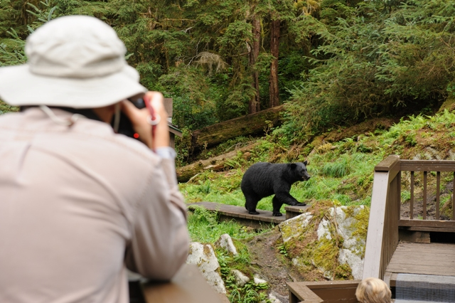 Man taking a picture of a bear