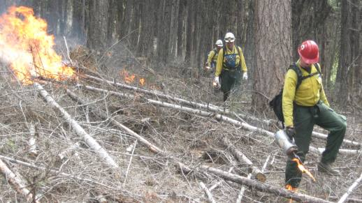 Photo: Forestry Technicians (Fire) igniting a prescribed burn.