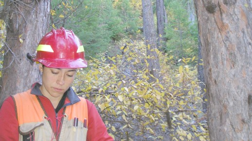 Photo: Forestry Technician (Silviculture) recording timber stand measurements.