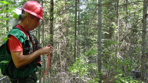 Photo: Forestry Technician (Silviculture) flagging timber stand measurement locations.