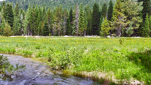 A stream of water flows by lush meadow and forest.