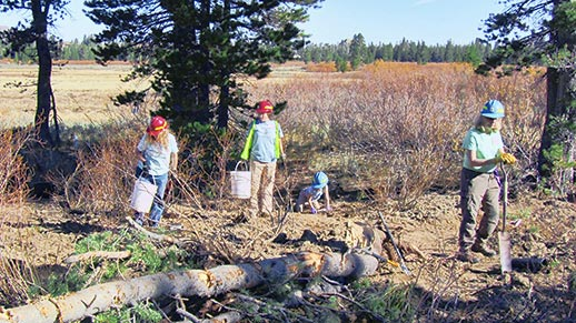 Three people and a child clear out brush near a meadow using buckets and shovels.
