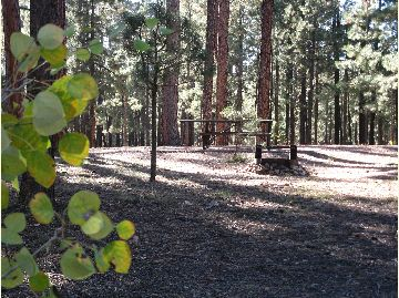 Canyon Point Campground image 2