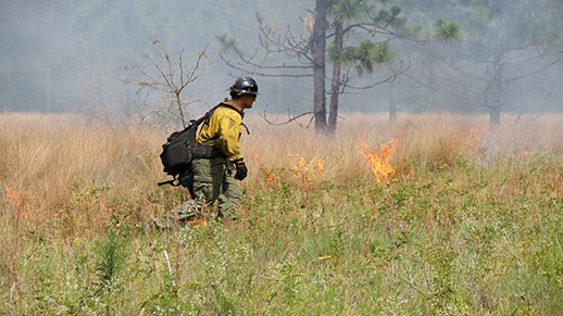 A wildland firefighter uses a drip torch while conducting a prescribed burn at Savannah River Site.
