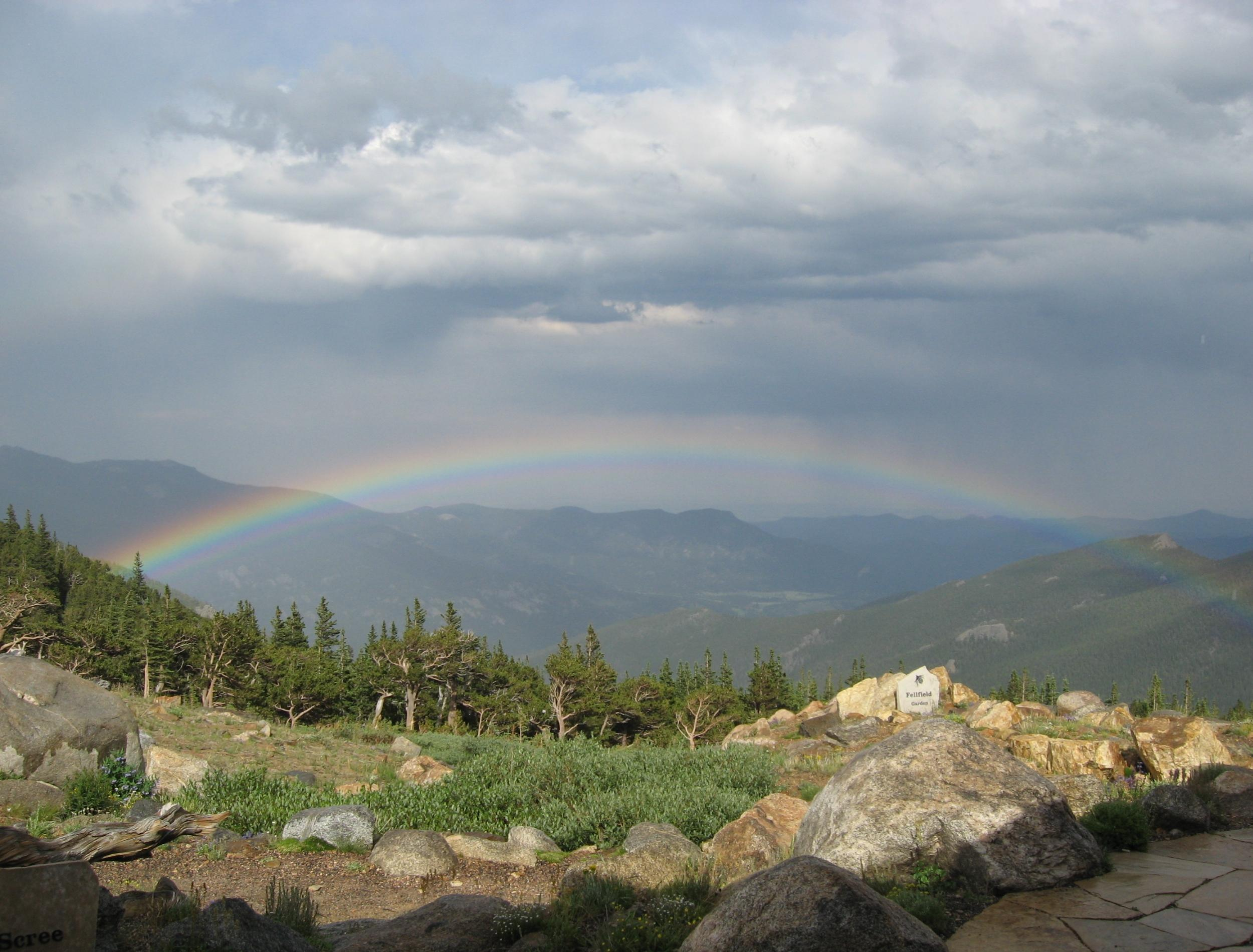 Rainbow above bristlecone pine trees.