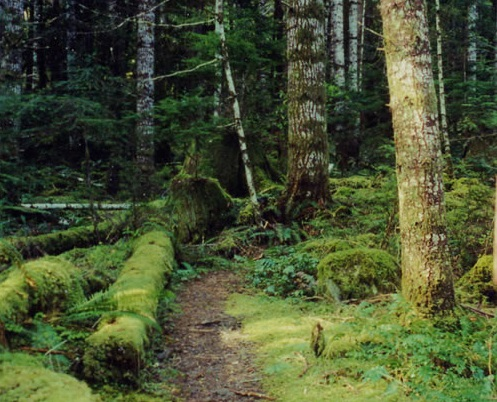 The Copper Creek Trail is a short but steep jaunt up Copper Ridge above Lake Cushman.