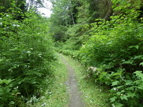The Gold Creek Trail is among the more popular mountain-b​ike trails.