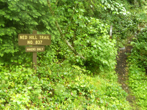 Ned Hill Trail is a short ramble up to the site of a historic lookout.
