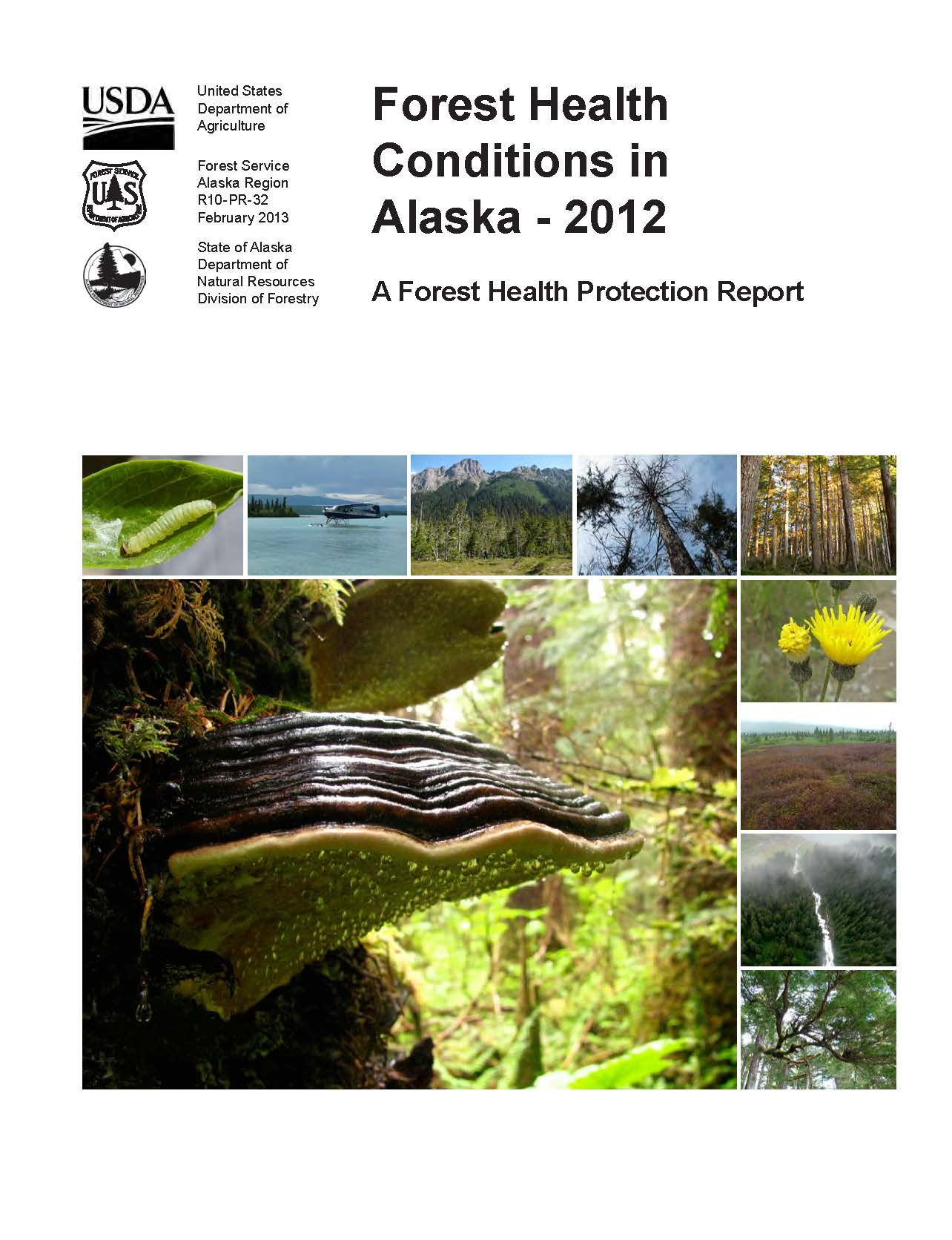 Cover photos of the 2012 Alaska Forest Health Conditions Report