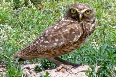Picture of an owl on the png.