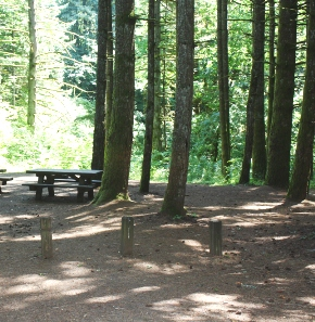 A picnic table and a small clearing among tall evergreen trees.