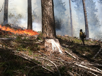 photo of forest service worker lighting an underburn in a timber sale area near Blue River Reservoir