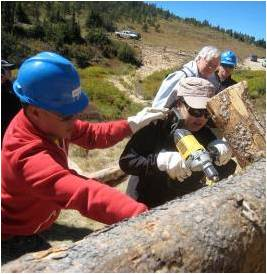 Three people wearing hardhats look on as a woman uses a drill on a large log.