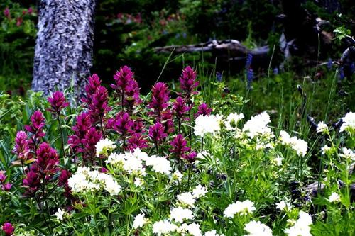 Photo of Wildflowers on Forest