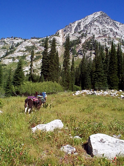 A hiker leading a llama into a subalpine mountain valley within Eagle Cap Wilderness.