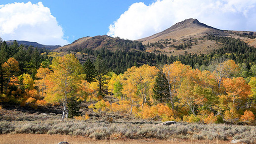 Beautiful fall colored aspens sit in front of Waterhouse Peak in Hope Valley.