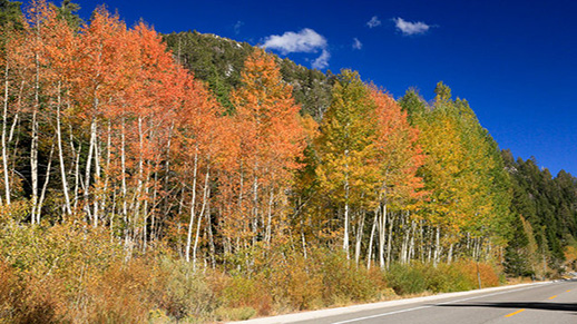 Aspens reveal beautiful fall color near Sorenson's Resort in Hope Valley.