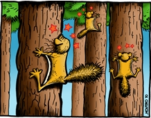 Flying Squirrels don't do well in stem-exclusion forests.