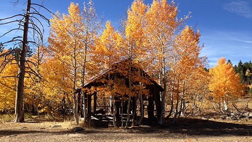 An outbuilding sits among golden aspen.