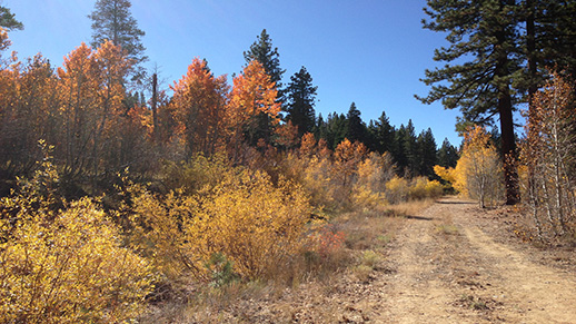 A trail on the North Shore of Lake Tahoe reveals beautiful fall color.