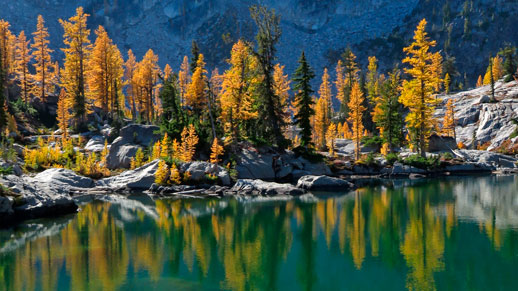 Subalpine Larch trees turning gold in the Entiat Mountains in October