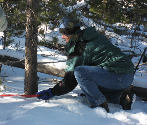 A visitor cuts a Christmas tree with a handsaw