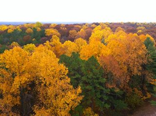 Сентябрь разбрызгал золото по кронам, листва пахнет терпким вином.  Stelprdb5439864