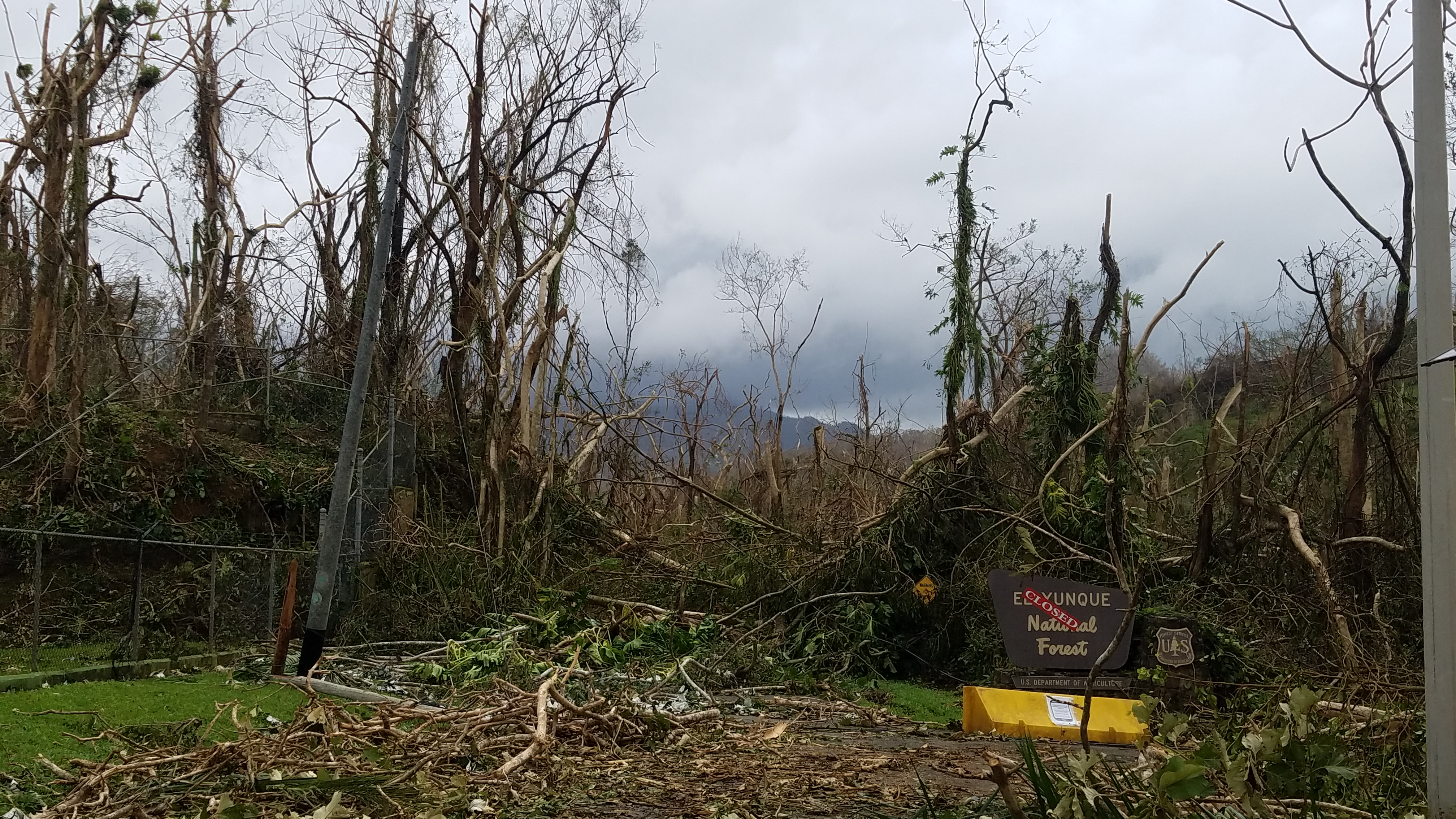 Devastation of Hurricane Maria surrounding National Forest sign with CLOSED tape over the entrance.