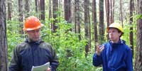 Two people discuss the management of a red pine stand