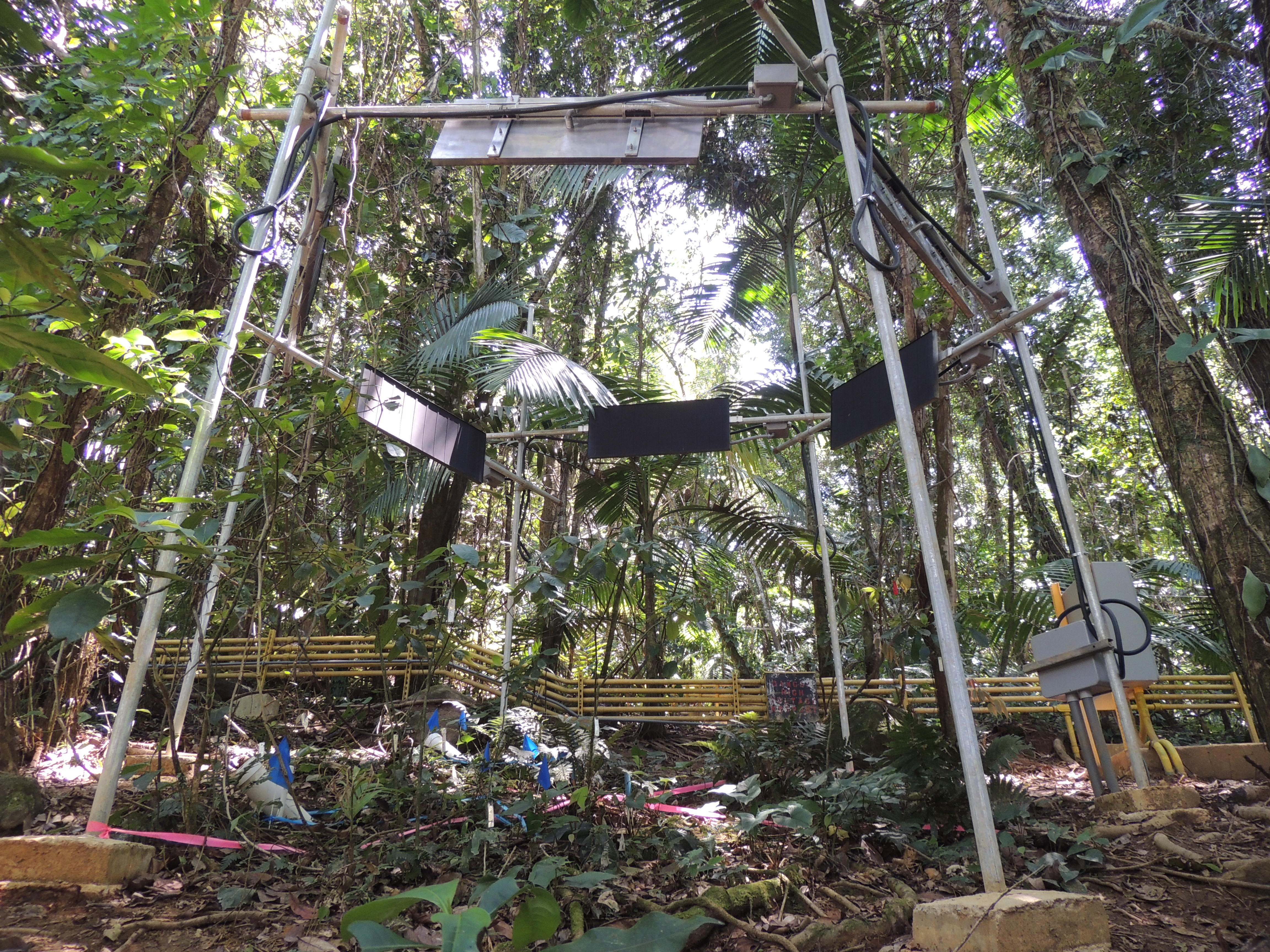 One of the TRACE experimental warming plots in 2015, before the experiment fully started. There was much more forest canopy and foliage in this site before the hurricanes hit in 2017.