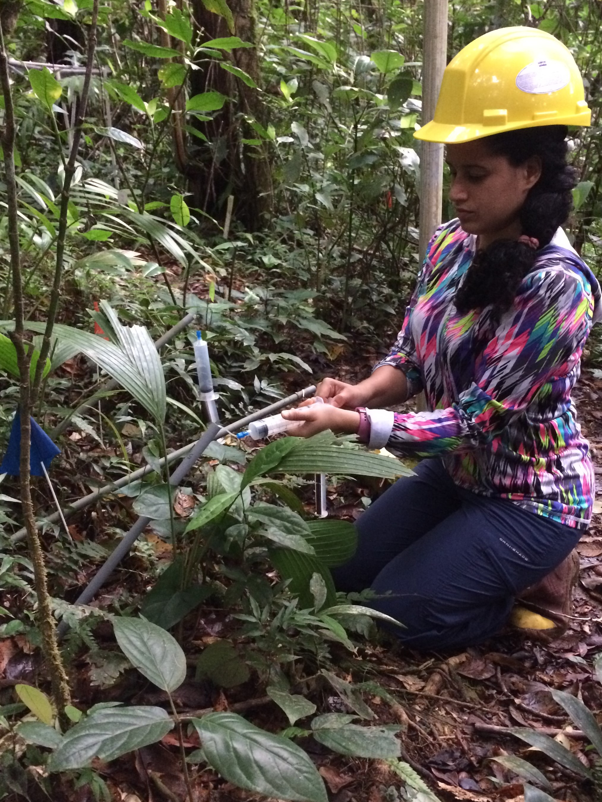 TRACE intern Tessaliz Quiles-Delgado is collecting soil pore water to analyze for nutrients.