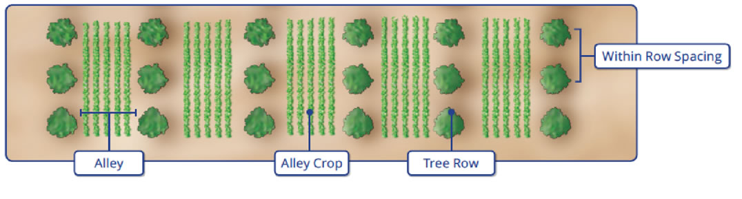 Alley cropping diagram showing alley, crop, and tree rows.