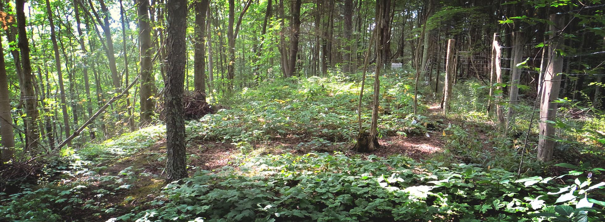 Forest Farming