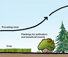and agroforestry illustration example