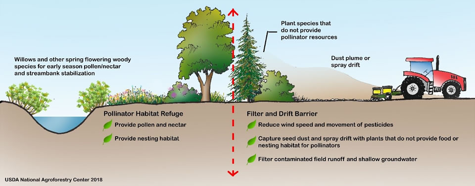 Diagram illustrating the benefits of agrforestry practices upon pollinators.