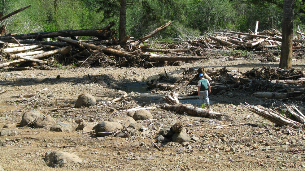 A study scientist walks near the debris flow terminus to inspect wood that had been deposited. USDA Forest Service photo.