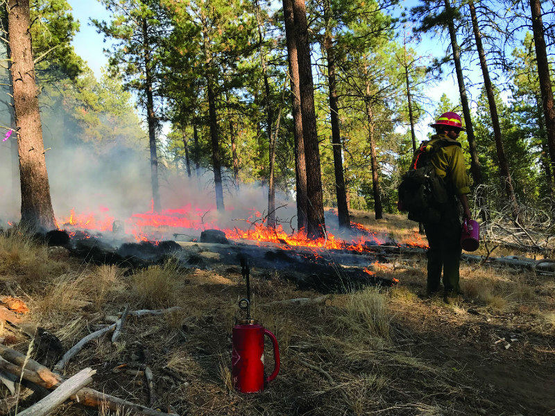 A prescribed burn in the Malheur National Forest in fall 2018 was conducted as part of a study examining the effects of burn season and frequency of prescribed burns on native and invasive plants.