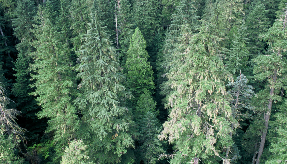 Wind River Experimental Forest, Washington. USDA Forest Service photo by Tom Iraci.