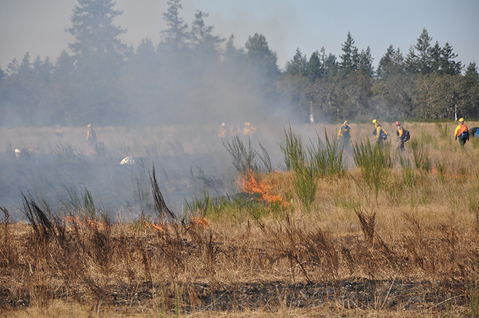 Joint Base Lewis-McChord Research Prescribed Burn 2012