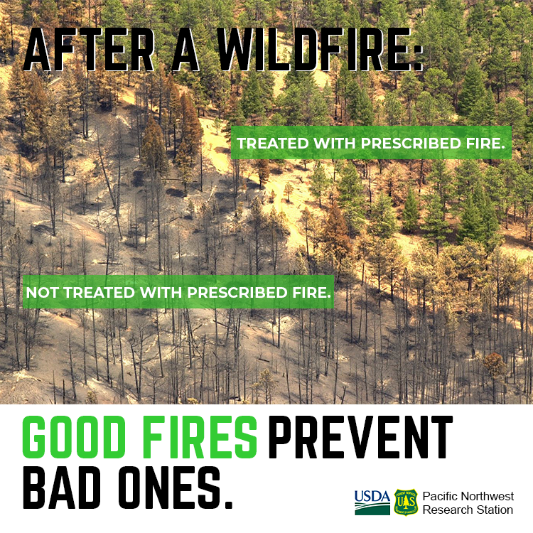 Front of prescribed fire infographic.