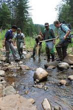 Scientists collected data on stream temperature, aquatic species like fish and invertebrates, streamside vegetation, and channel morphology.