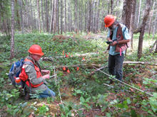 Two men in orange safety gear standing in a field in a forest measuring and recording the distribution and type of beargrass.
