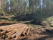 Some harvested timber is stacked near the forest site of an ongoing commercial thinning project.