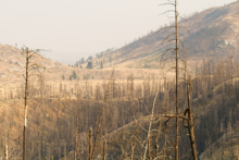 Forest burned in the 2014 Carlton Complex Fire in Washington.