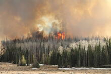 A prescribed burn conducted at the Fishlake National Forest, Utah, in 2020, showing flames and smoke in a forest.